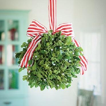 Mistletoe, Julia McCurley